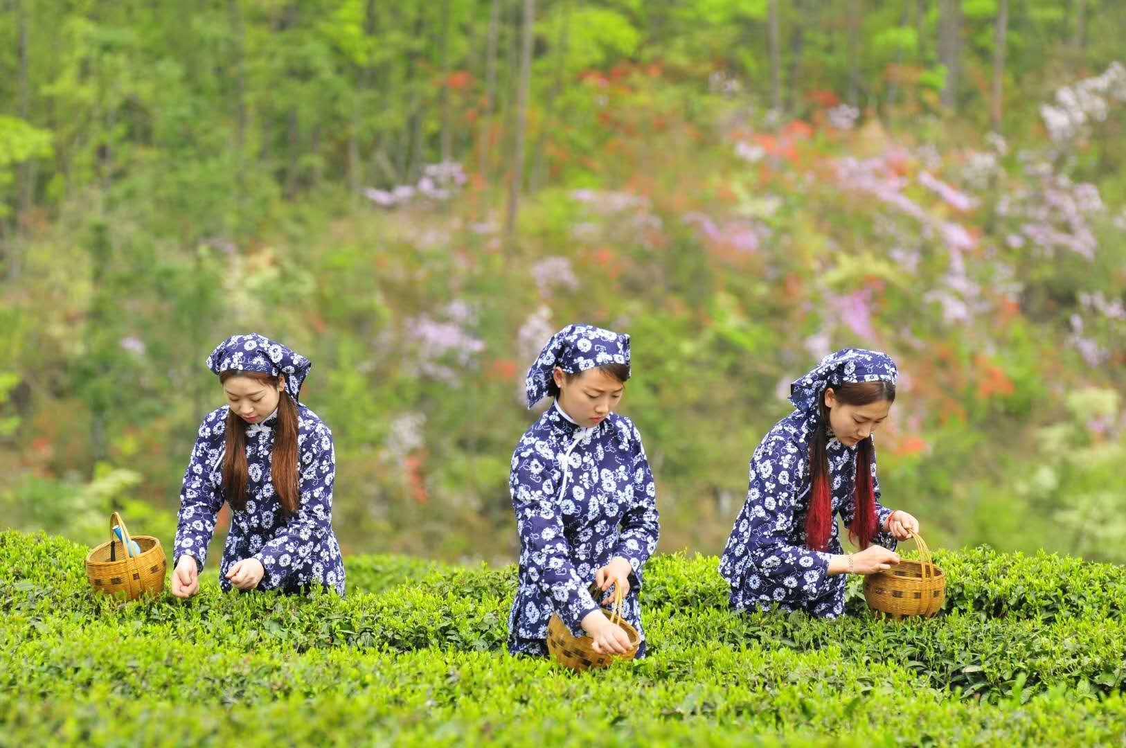 消费者眼中的赤壁青砖茶——赤壁青砖茶产业发展调研报告..